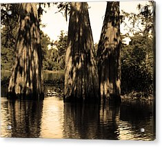 Trees In The Basin Acrylic Print by Maggy Marsh