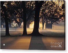 Trees In The Morning Mist Acrylic Print by Jeremy Woodhouse