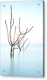 Trees In Water Acrylic Print by Flash Parker