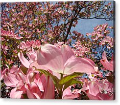 Trees Nature Fine Art Prints Pink Dogwood Flowers Acrylic Print by Baslee Troutman