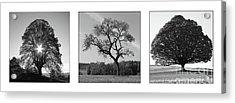 Trees On Canvas Acrylic Print by Bruno Santoro