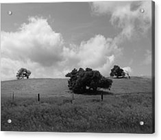 Acrylic Print featuring the photograph Trees On The Hillrise by Kathleen Grace