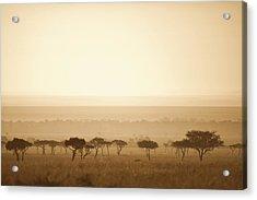 Trees On The Savannah At Sunset Masai Acrylic Print by David DuChemin