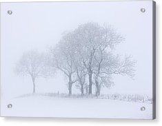 Trees Seen Through Winter Whiteout Acrylic Print by John Short
