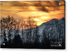 Trees With Orange Sky Acrylic Print