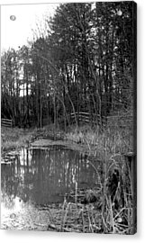 Trees With Pond Acrylic Print by Terry Thomas