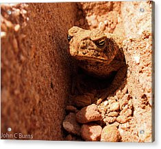 Trenched Frog Acrylic Print