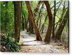 Acrylic Print featuring the photograph Trestle Walk by Kathryn Meyer