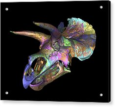 Triceratops Dinosaur Skull Acrylic Print by Smithsonian Institute