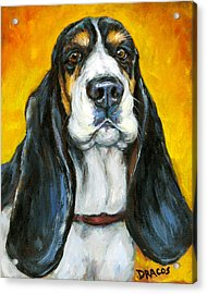 Tricolored Basset Hound On Gold Acrylic Print by Dottie Dracos