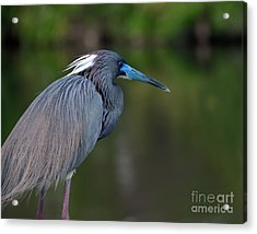 Acrylic Print featuring the photograph Tricolored Heron by Art Whitton