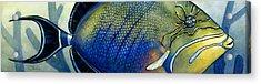 Triggerfish Acrylic Print by Alyssa Parsons
