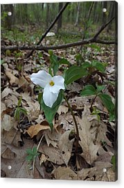Acrylic Print featuring the photograph Trillium by Gerald Strine
