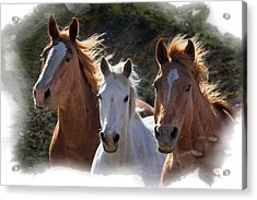 Acrylic Print featuring the photograph Trio by Judy Deist