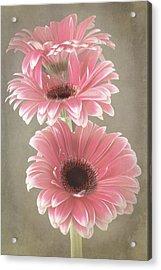 Triple Beauty Acrylic Print by Fiona Messenger