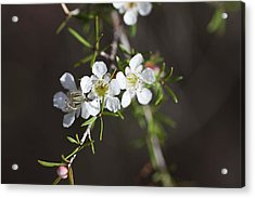 Acrylic Print featuring the photograph Triple Blossom by Carole Hinding