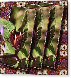 Acrylic Print featuring the photograph Triple Buds by Mario Carini