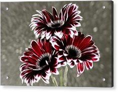 Triple Gerbera Fractalius Acrylic Print by Fiona Messenger