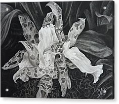 Triple Orchid Blossom Acrylic Print by Estephy Sabin Figueroa
