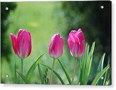 Triple Tulips Acrylic Print
