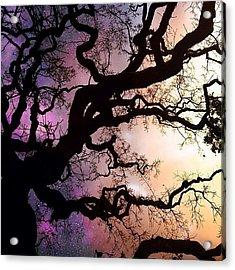 Trippy Breh. #ig #picoftheday Acrylic Print