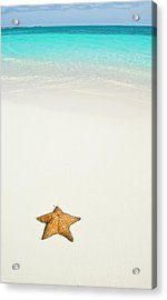 Tropical Beach And Starfish Acrylic Print by Mehmed Zelkovic
