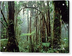 Tropical Cloud Forest Acrylic Print by Gregory G. Dimijian