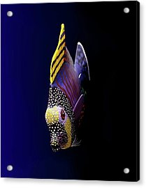 Tropical Fish Acrylic Print by Pieceoflace Photography