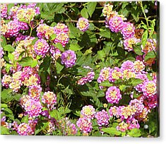 Acrylic Print featuring the photograph Tropical Lantana by Roena King