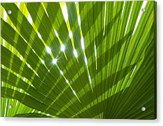 Tropical Palm Leaf Acrylic Print by Amanda Elwell