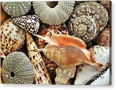 Tropical Shells Acrylic Print by Kaye Menner