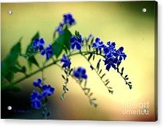 Tru Blu Acrylic Print