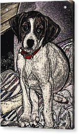 Trudy May The Puppy Acrylic Print by Robert Goudreau