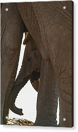 Trunk Touch Acrylic Print