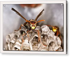 Acrylic Print featuring the digital art Try Me 01 by Kevin Chippindall