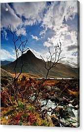 Acrylic Print featuring the photograph Tryfan And Tree by Beverly Cash