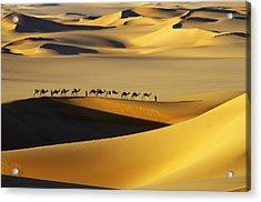 Tuareg Nomads With Camels In Sand Dunes Of Sahara Desert, Arakou Acrylic Print by Johnny Haglund