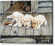 Tuckered Out Trio  Sold  Prints Available Acrylic Print