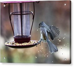 Tufted Seed Splash Acrylic Print by Bill Tiepelman