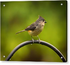 Tufted Titmouse On Pole Acrylic Print by Bill Tiepelman