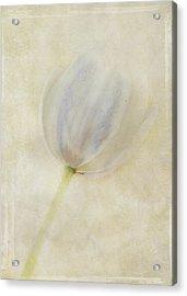 Tulip 1 Acrylic Print by Marion Galt