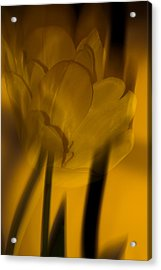 Acrylic Print featuring the photograph Tulip Abstract by Ed Gleichman