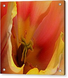 Acrylic Print featuring the digital art Tulip Abstract by Karen Harrison