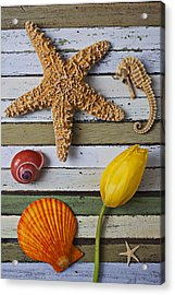 Tulip And Starfish Acrylic Print by Garry Gay