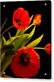 Acrylic Print featuring the photograph Tulip Arrangement 1 by Peter Mooyman