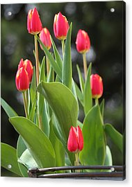 Acrylic Print featuring the photograph Tulip Bucket by Coby Cooper