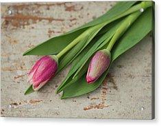 Tulip Buds Acrylic Print by Elin Enger