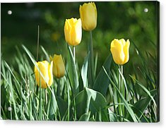 Acrylic Print featuring the photograph Tulip Pa by Denise Moore