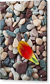 Tulip Petal And Wet Stones Acrylic Print by Garry Gay