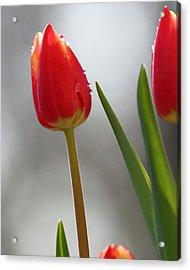 Acrylic Print featuring the photograph Tulip Sparkle by Coby Cooper